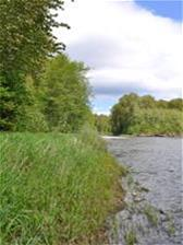 View downstream of the Cowichan River from Sandy Pool
