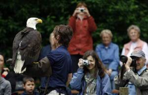 Eagle Show at the Raptor Centre
